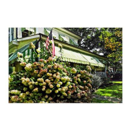 #White Hydrangeas By Green Striped Awning Acrylic Print - #floral #gifts #flower #flowers