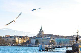 Geneva snaps