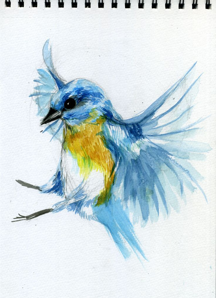 MC drawn: Bird—sketch: watercolour, brush and ink