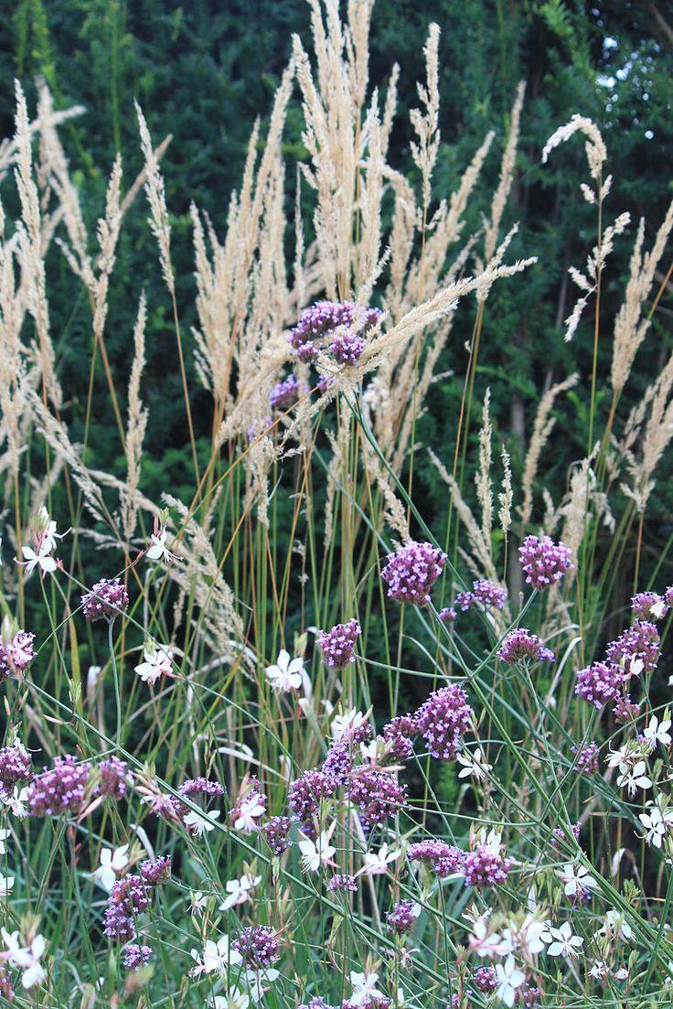 1264 best plant and garden colours- purple images on pinterest
