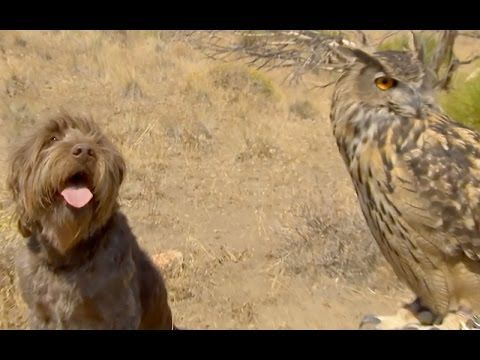 Dog and Deadly Owl are BFFs - YouTube