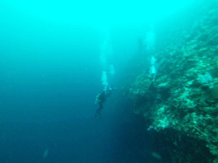 Wall dive Cebu olango 2014