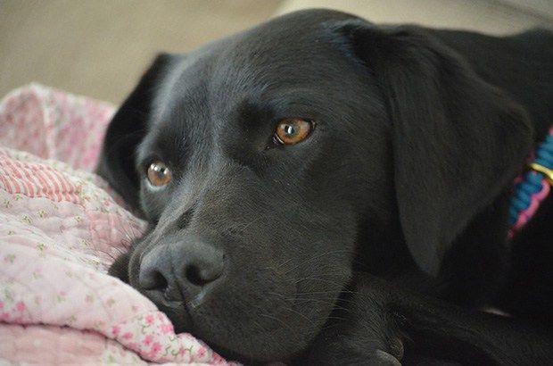 Remove Dog Pee Smell - LabradorRetrieverGuide.com