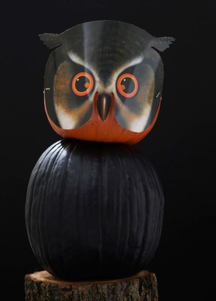 150 best pumpkin decorating images on pinterest decorating halloween pumpkin decorating ideas no carving