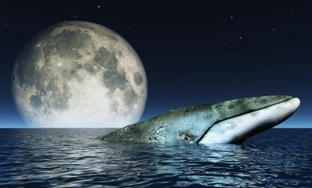 15 Weird & Wonderful Facts About Whales (Plus 4 Amazing Videos)