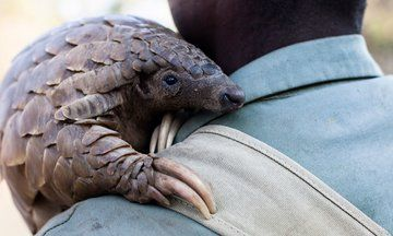 Literal Tons Of The World's Most Trafficked Mammal Seized In China | The Huffington Post