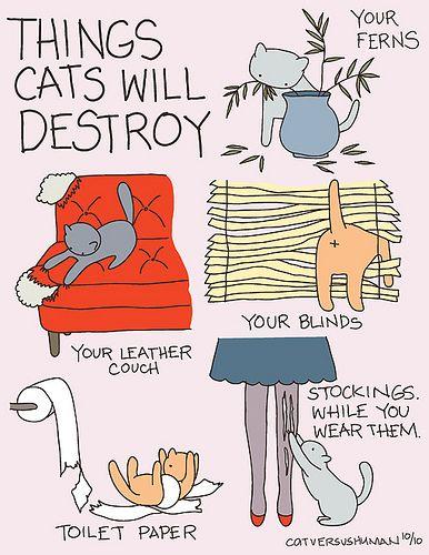 LOL but....true : ) #humor #cats