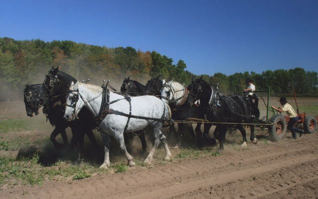 """Amish people gave an exhibition to show how they work farmland with Belgian horses,"" writes Country magazine reader Nancy Gill."