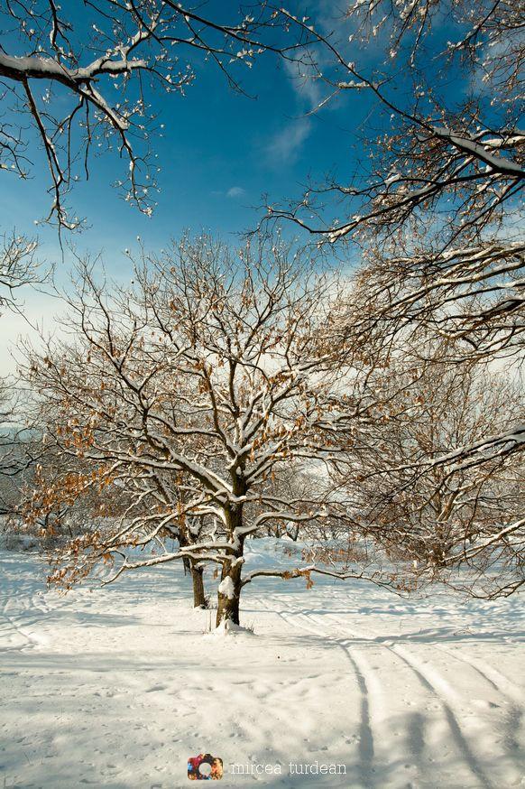 Winter in Romania - by Mircea Turdean