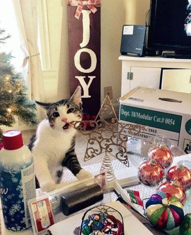 Grinch, é você? Esses animais odeiam o Natal mais do que tudo no mundo | Virgula