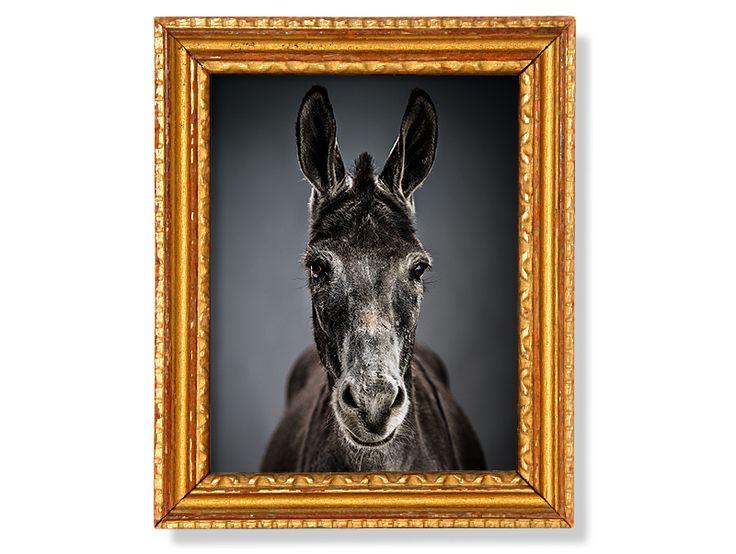 Adopt a donkey | The Donkey Sanctuary