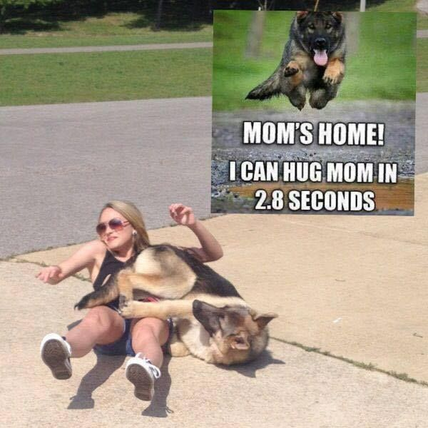 Oh the bruises I have when my German Shepherd grand pup barrels to see me..and can't stop himself...125 lbs...He loves his grandma. smile emoticon As my German Shepherd Butters looks at him like he is crazy..lol.jpg (600×600)