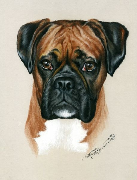 Best 25 dog artwork ideas on pinterest colorful artwork acrylic art paintings and foundation - Boxer chien dessin ...