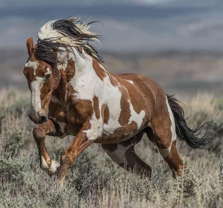 Wild Horse Photography Collective – #Kollektiv #PFERD #Fotografie #Wild