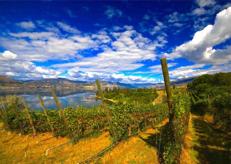 Kettle Valley Vineyard