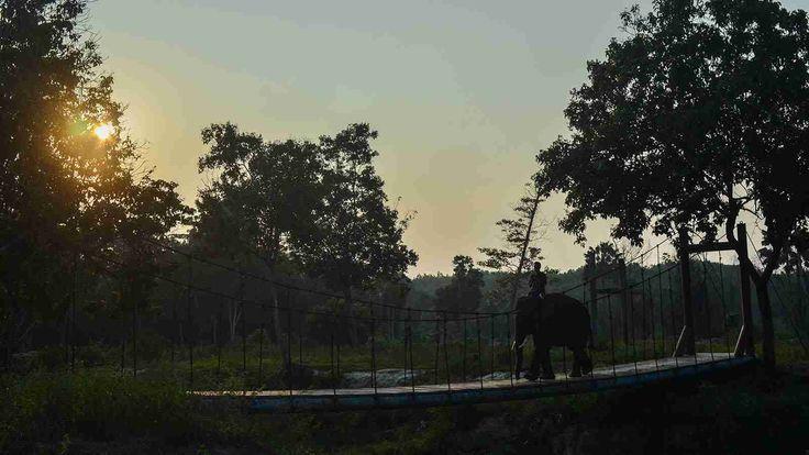 Pusat Pelatihan Gajah (PLG) Minas