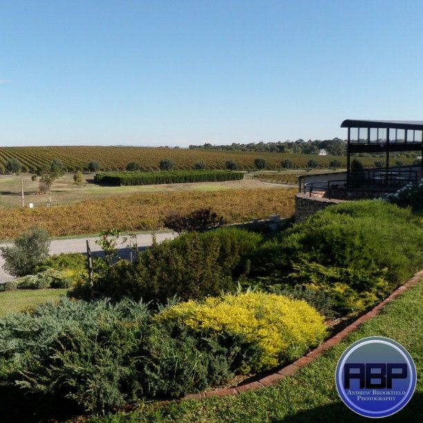 Just a quick shot of the beautiful McLaren Vale wine region in Adelaide (South Australia)!  I believe this winery was called Maxwells and the mead there was fantastic!