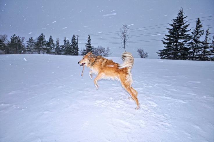 get outta my way is a fun winnipeg winter day!