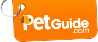 Our DoggySnooze snoozeLounge modular, chew-resistant dog bed is featured in Pet Guide's Top 10 Comfy Dog Beds feature. December 2013.