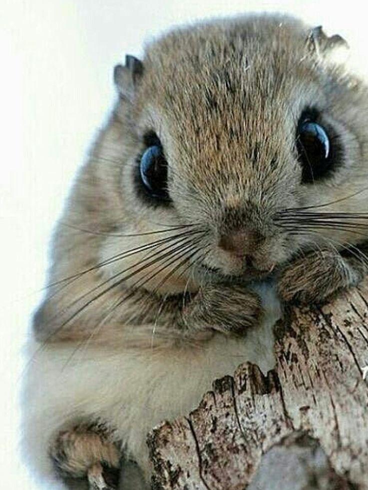 сне милые животные картинки список банкомат