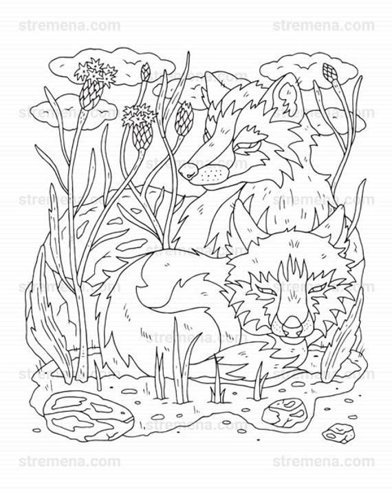 Pin On Wolf Coloring Pages