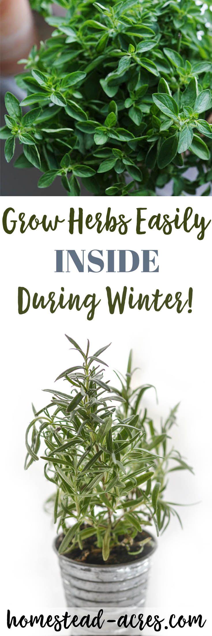 Best 25 Growing Herbs Indoors Ideas On Pinterest Indoor