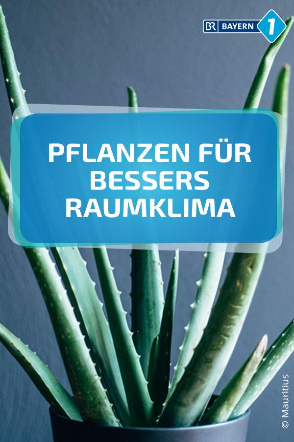 Luftreinigende Pflanzen: Diese Pflanzen verbessern das Raumklima ...