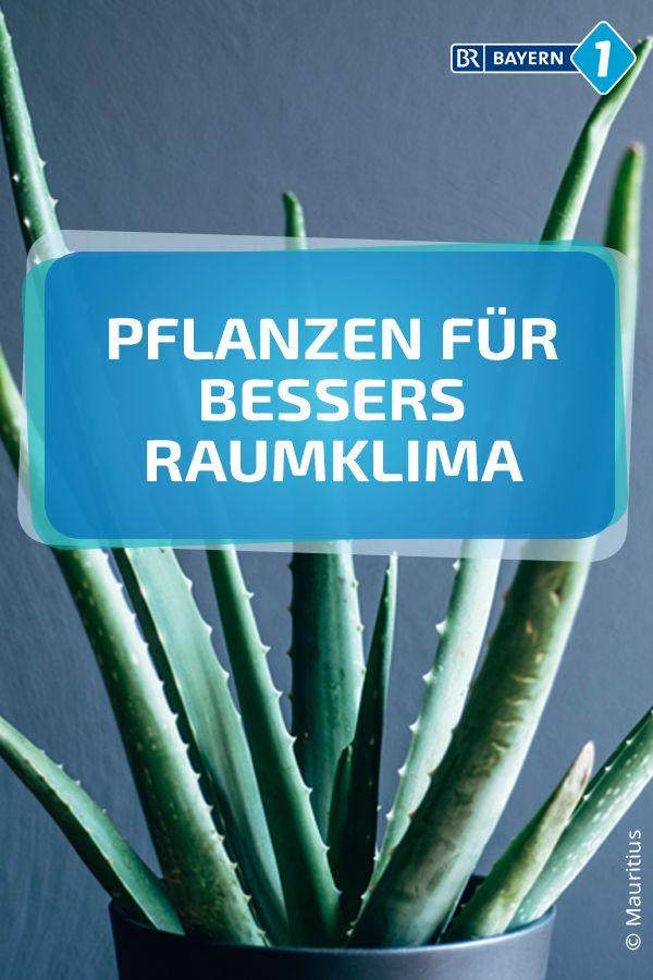 Luftreinigende Pflanzen Diese Pflanzen Verbessern Das Raumklima