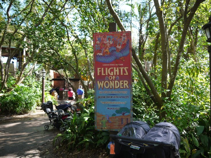 Is Flights of Wonder at Animal Kingdom Getting It's Wings Clipped?