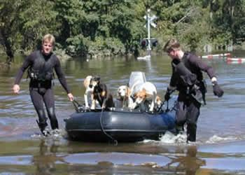 These animals were rescued in North Carolina after Hurrican Floyd.