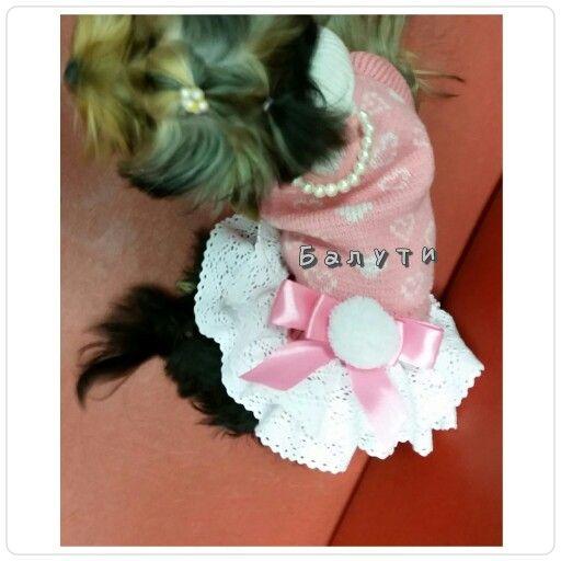 Красивое платье ручной работы от Марго для маленькой Монки. Магазины одежды для собак. Груминг. Все в одном месте. Распродажи.  8 495 764 90 21Балути.ру #йорк #цветы #красиваясобака маленькаясобака#декор#творчество#оформление#своимируками#сделайсам##рукодельница#рукоделие#ручнаяработа#минийорк#терьер#химки#куркино#новокуркино#зеленоград#москва#добропожаловать#атмосфералюбви#формула #шпиц #тойтерьер #чихуахуа #левретка #пинчер #джекрасселтерьер #расселтерьер #собака #кошка #минипиги…