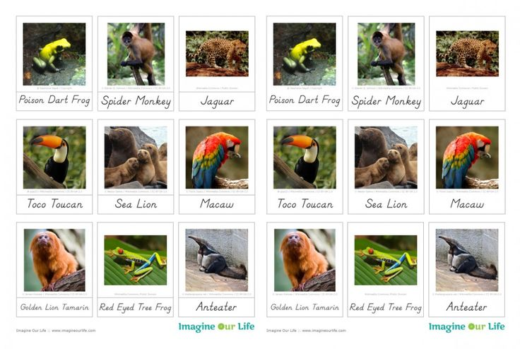 Animals of South America for the Montessori Wall Map & Quietbook with Printables
