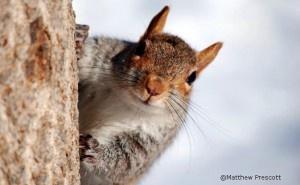 Squirrel Appreciation Day:)