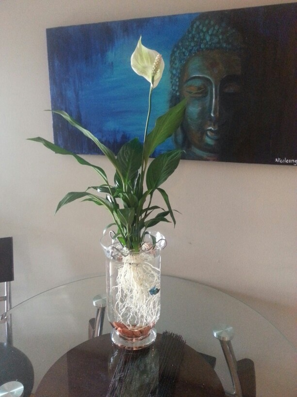 Use a vase rocks and a peace lily cleaned of all soil as for Plant with fish in vase