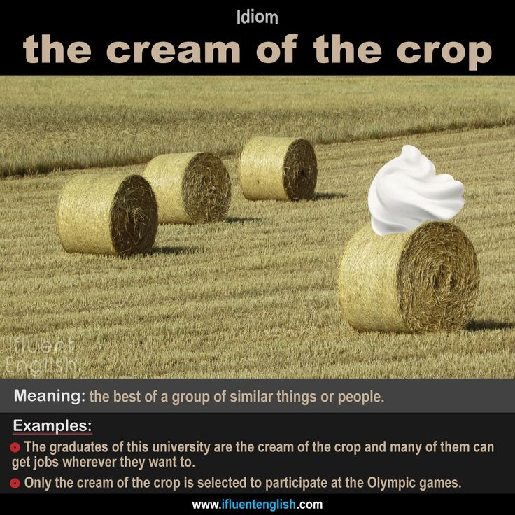 """Idiom: the cream of the crop   Meaning: the best of a group of similar things or people   Example: """"These two students are very clever. They are the cream of the crop in their class."""""""