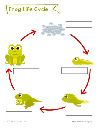 Label The Life Cycle Of The Frog Primarylearning Org Lifecycle Of A Frog Frog Life Cycle Printable Frog Life Cycle Activities