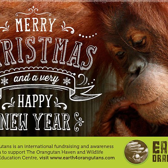 Earth 4 Orangutans Christmas Card - 2 http://www.redbubble.com/people/rawildlife/works/11124952-earth-4-orangutans-christmas-card-2?card_size=4x6&p=greeting-card&ref=shop_grid  For a small price you can make a huge difference!
