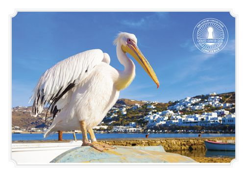 "Our Concierge recommends:  As you stroll the wonderful streets of the island, you may run into Petros, a local celebrity and ""mascot"" of #Mykonos for more than 30 years. #santamarina #petrosthepelican"