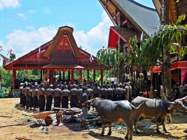 Tana Toraja. Sulawesi