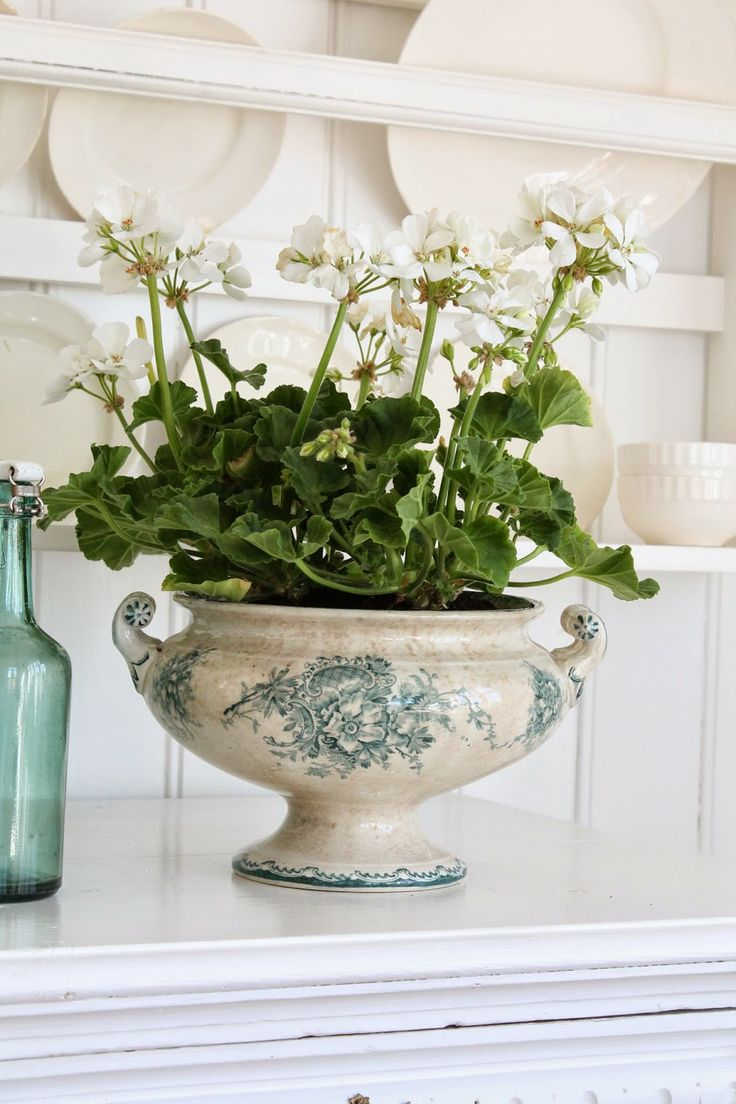 This is such a good use of all those beautiful tureens that have broken or missing lids.  VIBEKE DESIGN