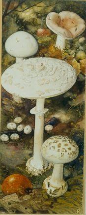 #Verkade album #paddenstoelen