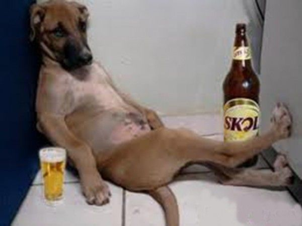 Drunk dog had one too many beers