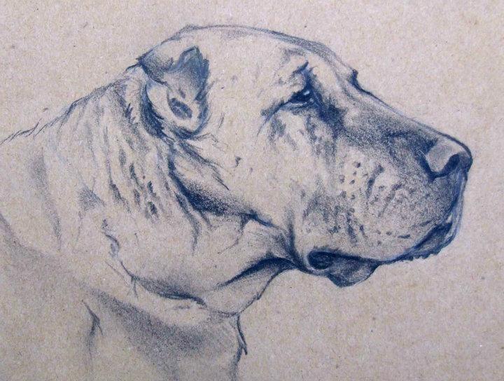 Boz Çoban Köpekleri Irk Standardı | AVRASYA KÖPEK IRKLARI FEDERASYONU - ALIANZ TURKEY