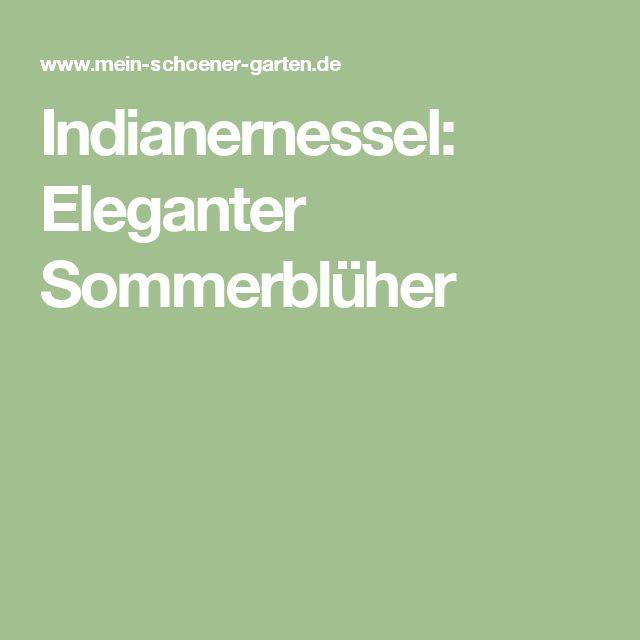 Indianernessel: Eleganter Sommerblüher