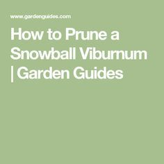 How to Prune a Snowball Viburnum |  Garden Guides