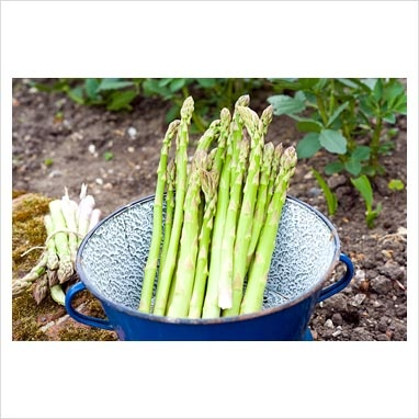 fresh asparagus anyone?