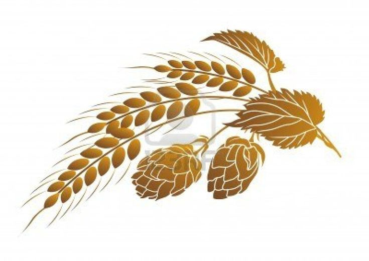 Iillustration of hops and ears of wheat Stock Photo - 4570805