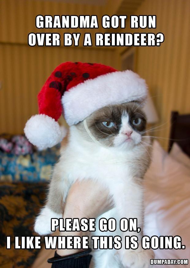 Hahaha. Grumpy Cat Hates Christmas – 20 Pics