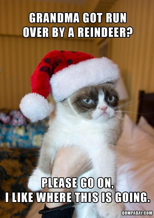 The 25+ best Grumpy cat christmas ideas on Pinterest | Grumpy cat ...