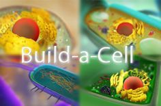 Build-A-Cell is a drag and drop game to teach students about the organelles and organelle substructures within a plant, animal, bacterial, and fungal cell.
